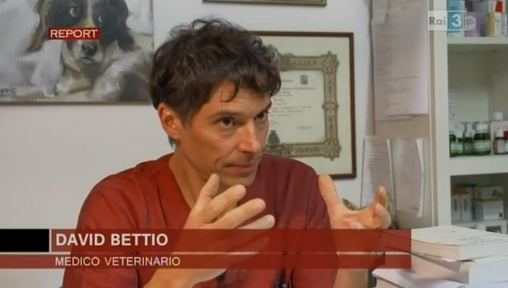Bettio Report